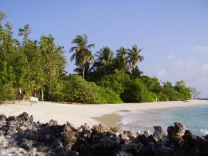 maldive-north-male-atoll-asdu-4
