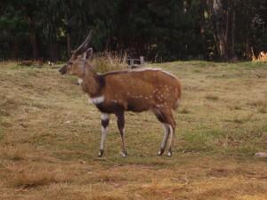 malawi nyika 1