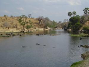 tanzania ruaha 2