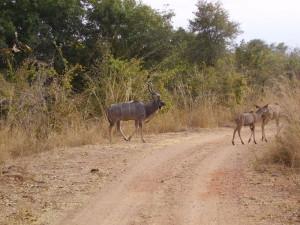 zambia south luangwa 4